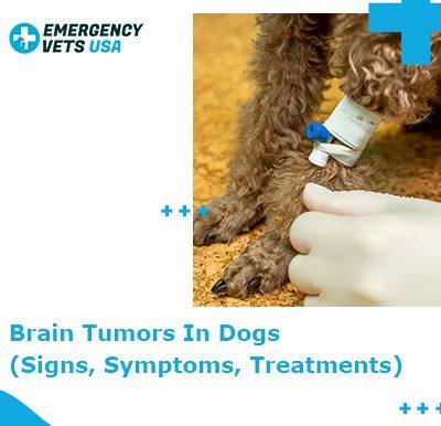 Brain Tumor In Dogs