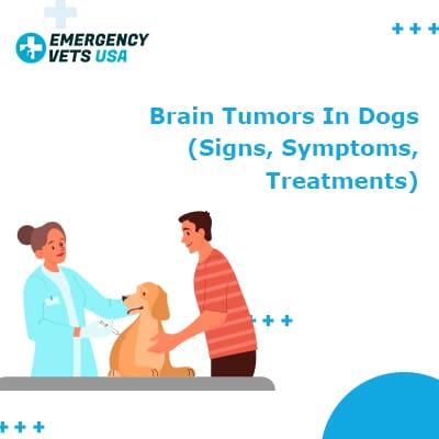 Brain Tumors in Dogs