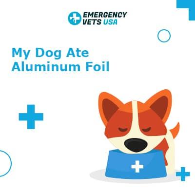 Dog Ate Aluminum Foil