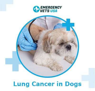 Dog Lung Cancer