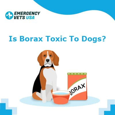 Is Borax Toxic To Dogs