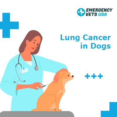 Lung Cancer in Dogs