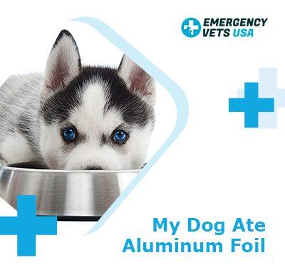 My Dog Ate Aluminum Foil