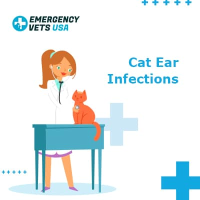 Cat Ear Infections
