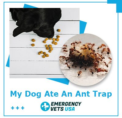 Dog Ate An Ant Trap
