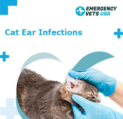 Ear Infections in Cats