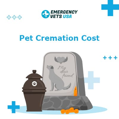 Pet Cremation Cost