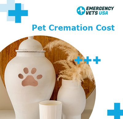 Pet Cremation Costs