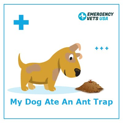 What To Do If My Dog Ate An Ant Trap