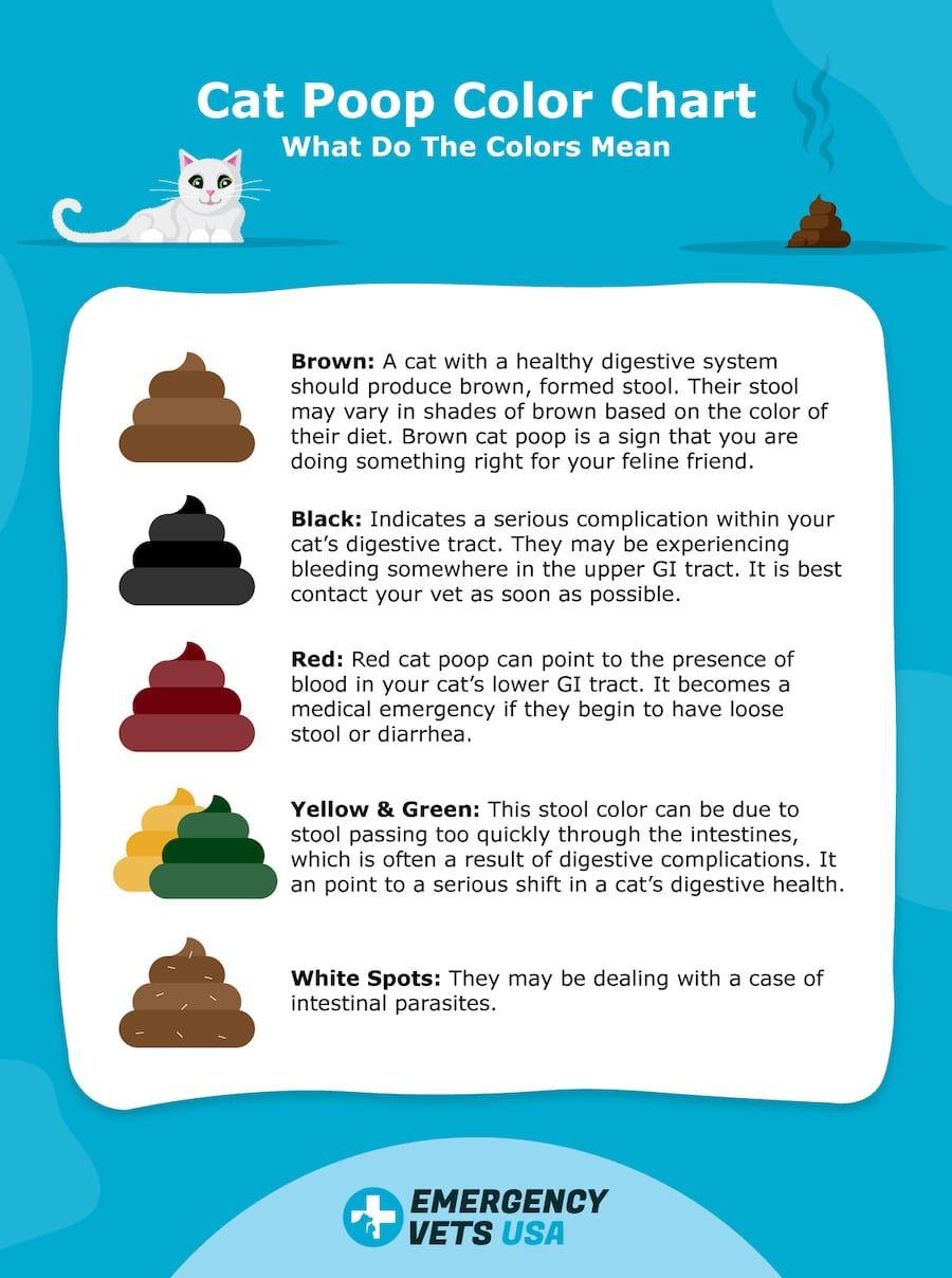 Cat Poop Color Chart What Do The Colors Mean