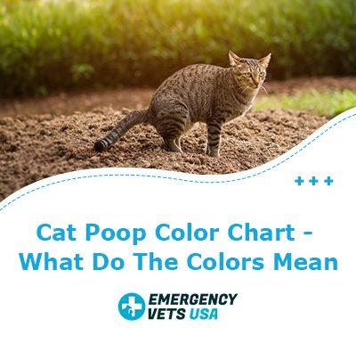 Cat Poop Color Guide