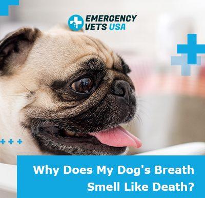 Dogs Breath Smells Like Death