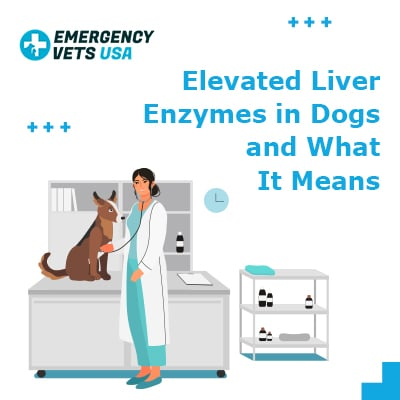 Elevated Liver Enzymes in Dogs and What It Means