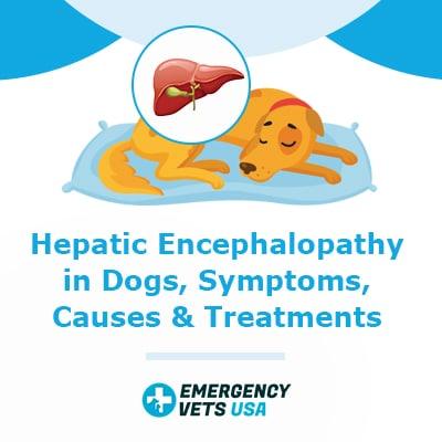 Hepatic Encephalopathy in Dogs