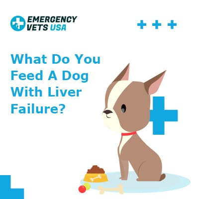 What Do You Feed A Dog With Liver Failure