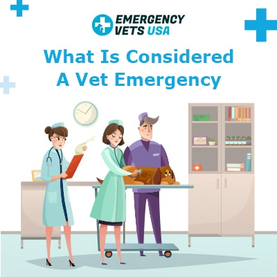 What Is Considered A Vet Emergency