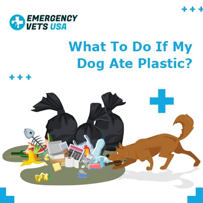 What To Do If My Dog Ate Plastic