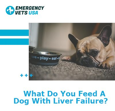 What To Feed A Dog With Liver Failure