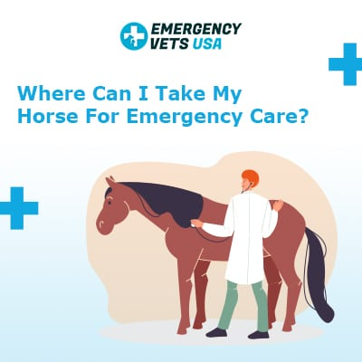 Where Can I Take My Horse For Emergency Care