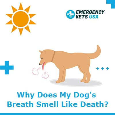 Why Does My Dogs Breath Smell Like Death