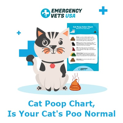 Cat Poop Chart - What Does Your Cats Stool Mean