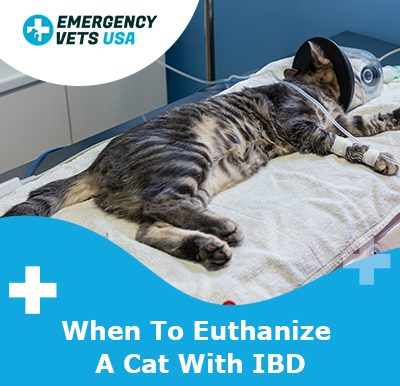 Euthanize A Cat With IBD