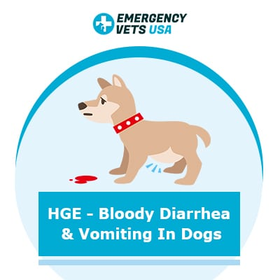 HGE - Bloody Diarrhea and Vomiting in Dogs