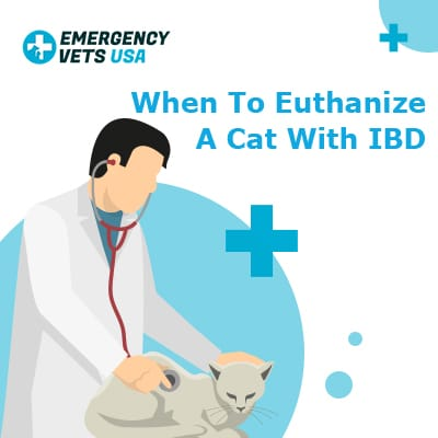 When To Euthanize A Cat With IBD