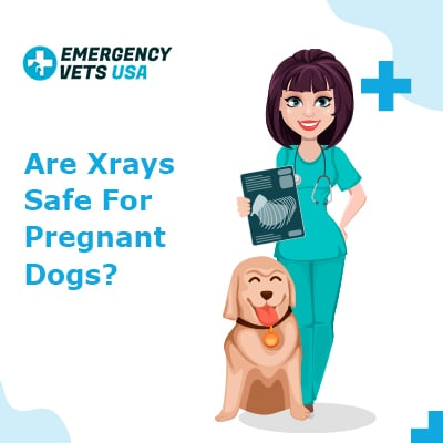 Are Xrays Safe For Pregnant Dogs