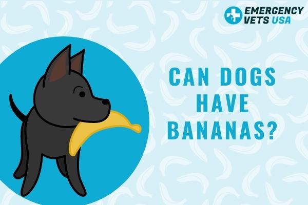 Can My Dog Have A Banana