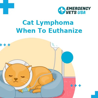 Cat Lymphoma When to Euthanize