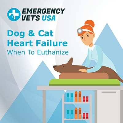 Dog and Cat Heart Failure When To Euthanize