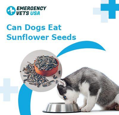 Dogs Eat Sunflower Seeds