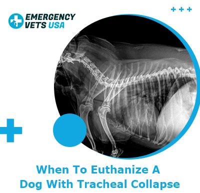 Euthanize A Dog With Tracheal Collapse