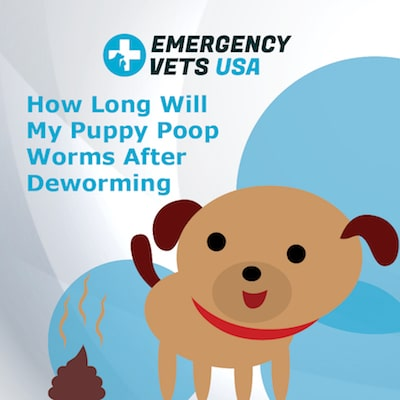 How Long Will My Puppy Poop Worms After Deworming
