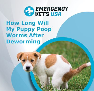 Puppy Poop Worms After Deworming