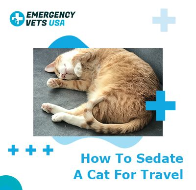 Sedate A Cat For Travel