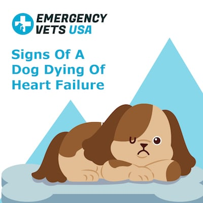 Signs of a Dog Dying of Heart Failure