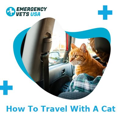Traveling With A Cat