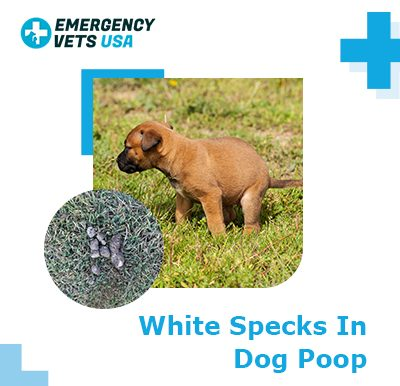 What Are White Specks in Dog Poop