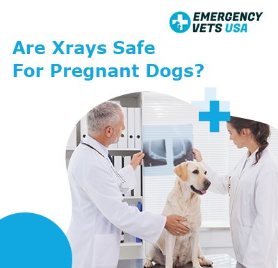 Xrays Safe For Pregnant Dogs