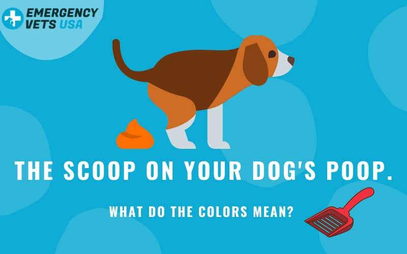 Dog Poop Color Chart What Do The Colors Mean