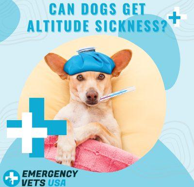 Dogs Get Altitude Sickness