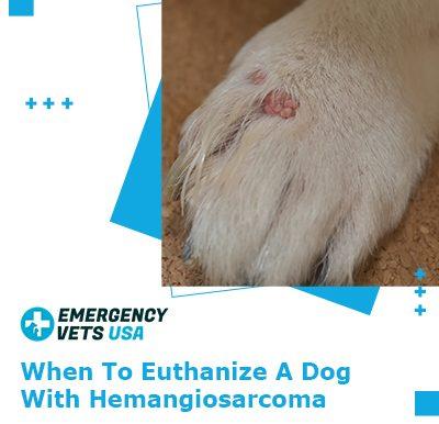 Euthanize A Dog With Hemangiosarcoma