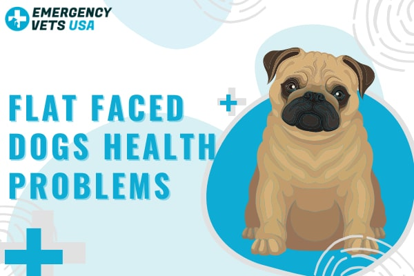 Flat Faced Dog Health Problems