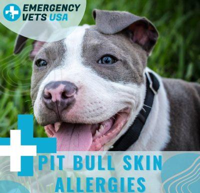 My Pit Bull Has Skin Allergies