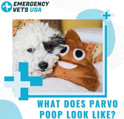 Parvo Poop Look Like