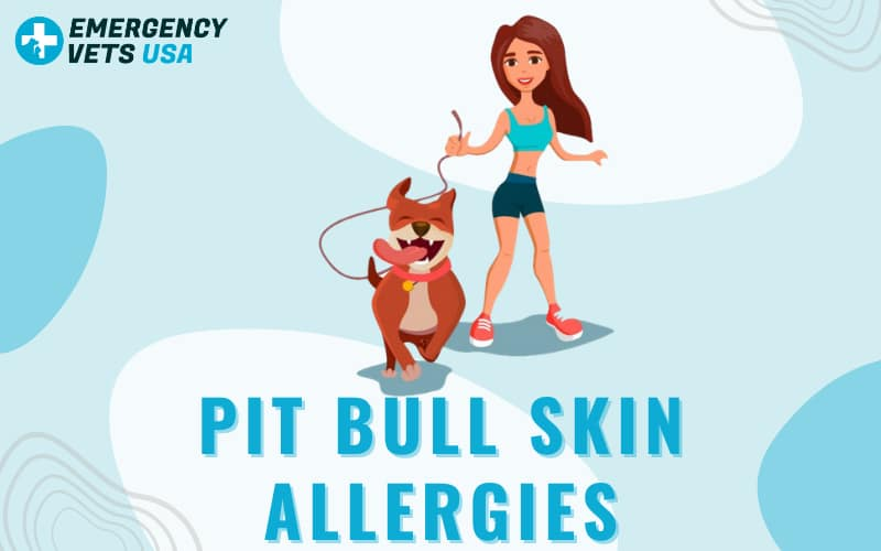 Pit Bull Skin Allergies