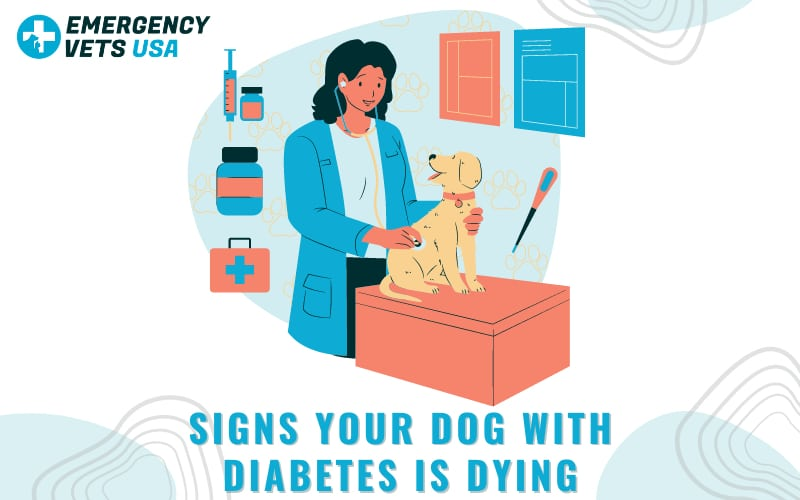 Signs Your Dog With Diabetes Is Dying