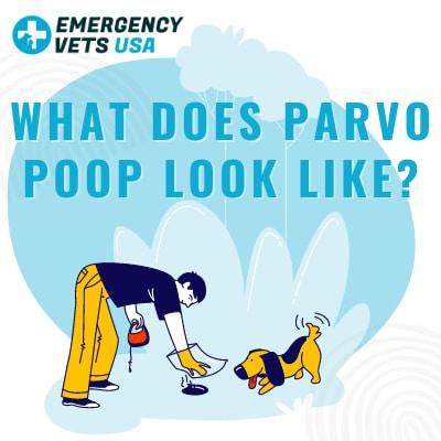 What Does Parvo Poop Look Like